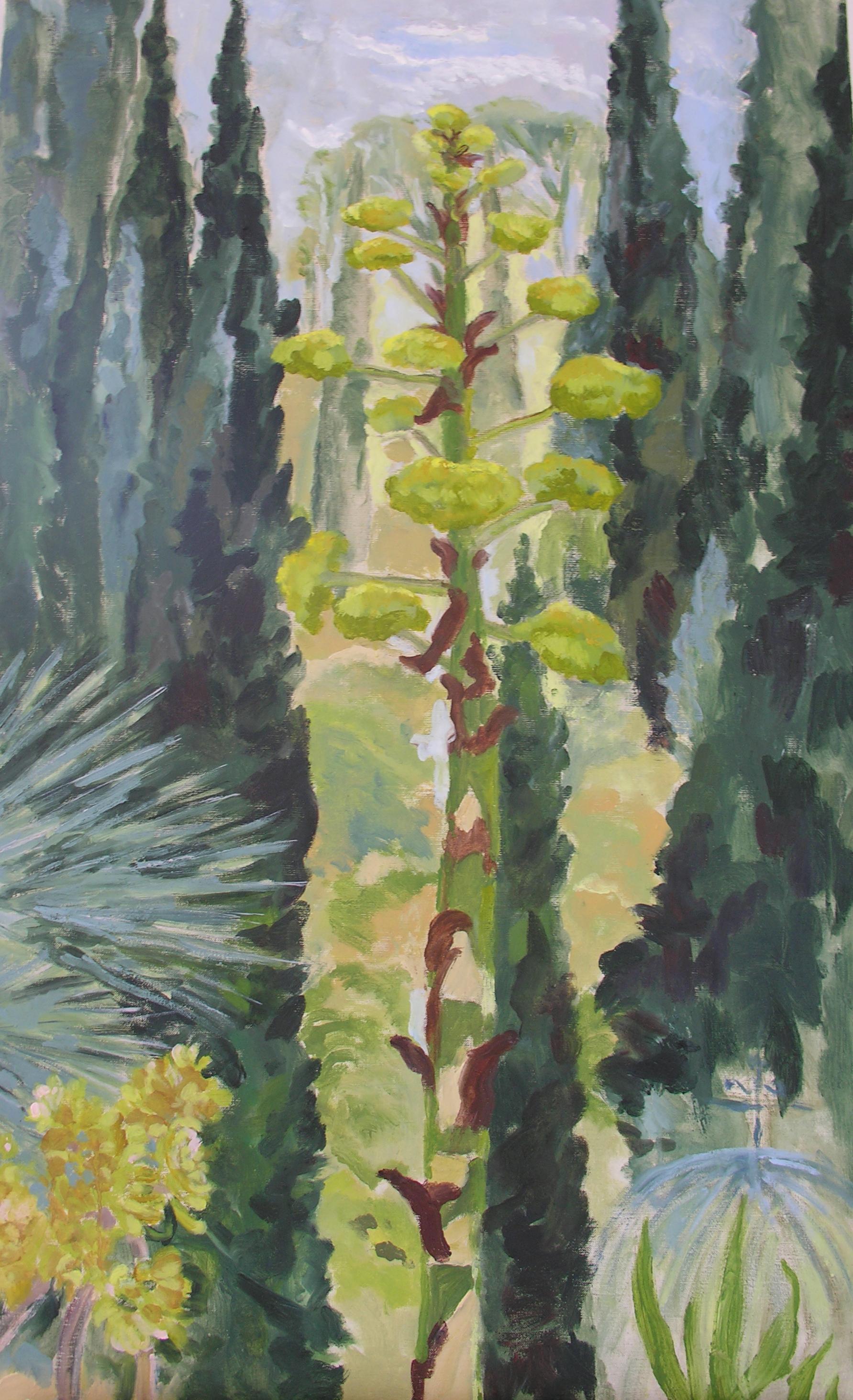 Image of - Agave Salmiana, Aeonium & Cypress