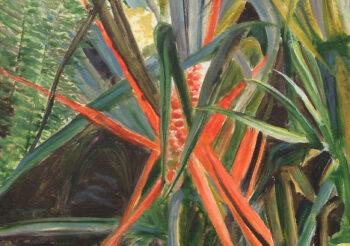 Image of - Bromelia balansae