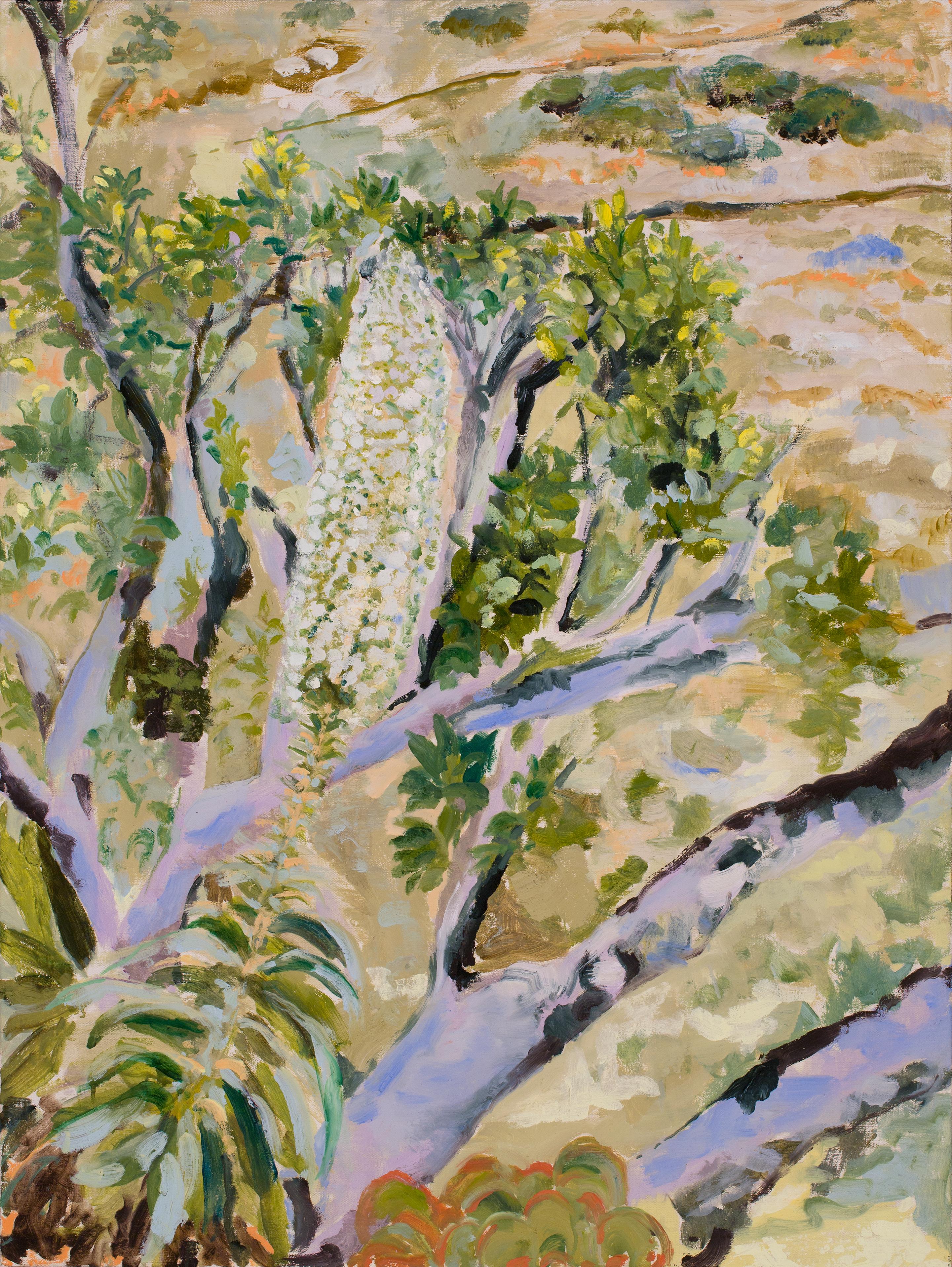 Image of - Echium and Laguna Trail