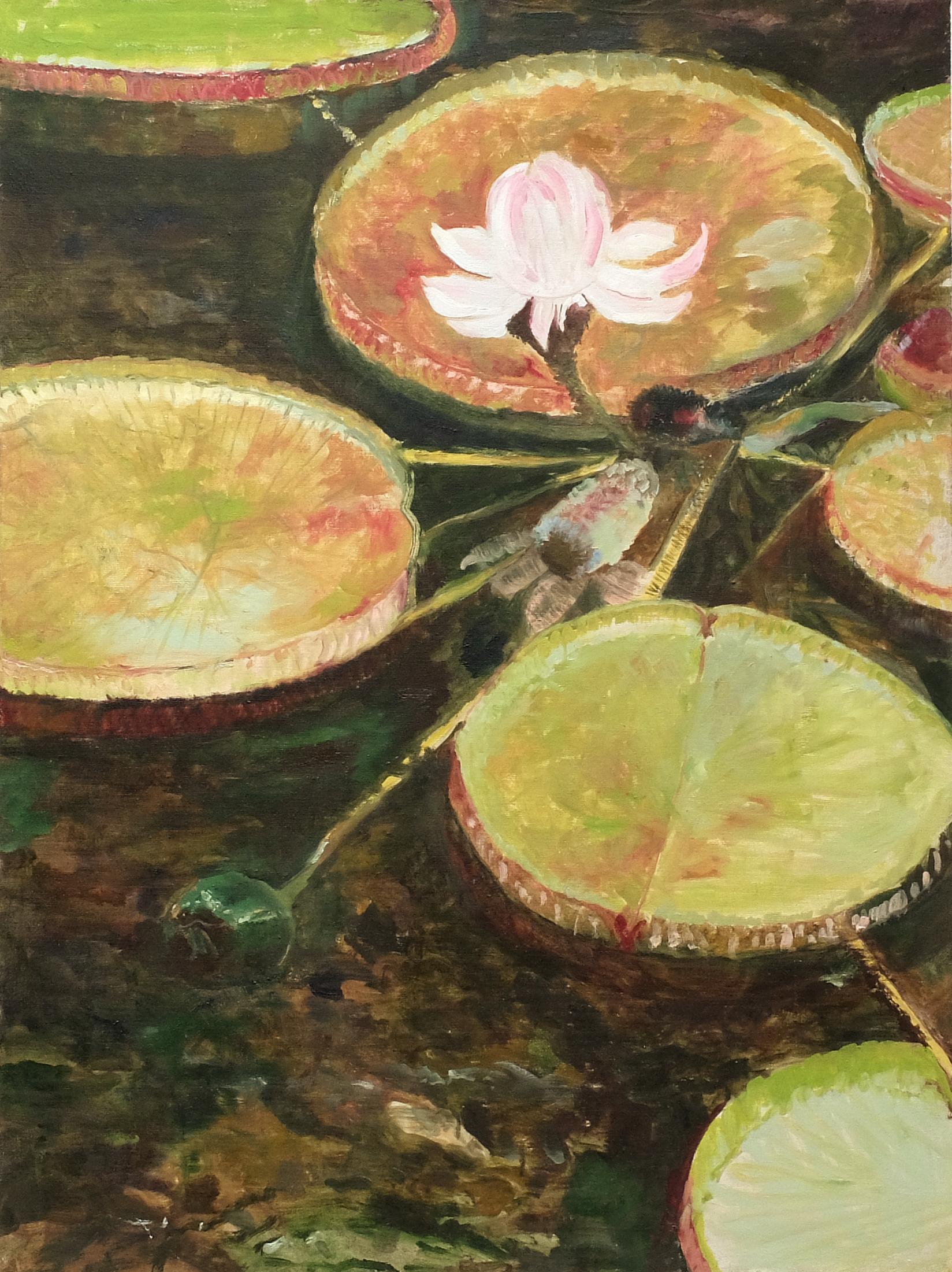 Image of - Victoria Amazon Lily I