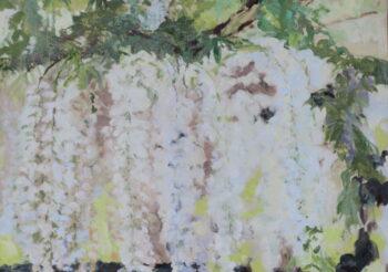 Image of - Wisteria Floribunda